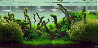 Small Tank Aquascaping Basic Forms Aqua Rebell