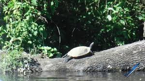 Delaware travel songs images 83 bird songs on broad creek part 2 laurel delaware by jpg