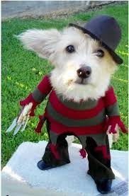 Halloween Costume Ideas For Pets 137 Best Dog Halloween Costumes Images On Pinterest Costume