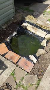 frog spawn and goldfish water features homes for wildlife