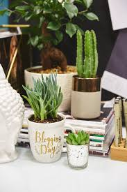 Plant For Desk Best Plants For Your Desk Green Thumb Not Needed
