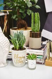 Plants For Desk Best Plants For Your Desk Green Thumb Not Needed