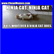 Ninja Memes - ninja cat clean memes the best the most online