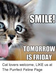 Friday Cat Meme - smile tomorrow is friday cat lovers welcome like us at the purrfect