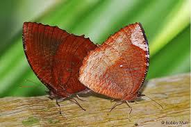 butterfly bobby valentino lyrics bobby v butterfly lyrics 2