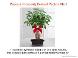 good house warming gifts peace u0026 prosperity money tree realtor housewarming thank you gift