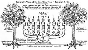 menorah tree of the godly purpose of the cross the fish the menorah and the