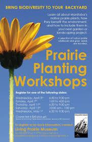 native plant project 22 best prairie manitoba garden images on pinterest native