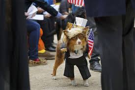 from donald trump to marty mcfly dogs flaunt costumes for