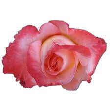 china with roses china icon png clipart image iconbug