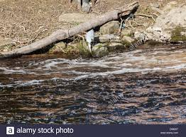 a fishing weir stock photos u0026 a fishing weir stock images alamy