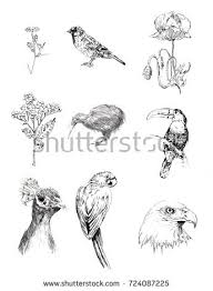 bird drawing stock images royalty free images u0026 vectors