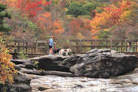 Cottages That Allow Dogs by Pet Friendly Asheville Nc