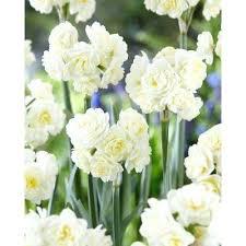 garden plants with white flowers shrub white flowers white shrub