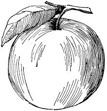 drawn apple tutorial pencil and in color drawn apple tutorial