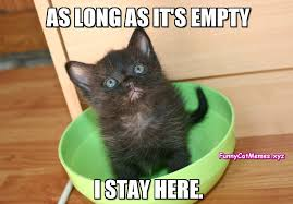 if the bowl is empty funny kitten meme