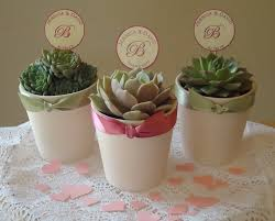 Top 10 Wedding Favors by Lovable Plants For Wedding Favors Top 10 Plants And Plantable