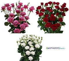 fresh flowers in bulk wholesale spray roses buy spray roses bulk spray roses fresh
