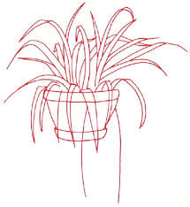 1 outline the plant how to draw a spider plant howstuffworks
