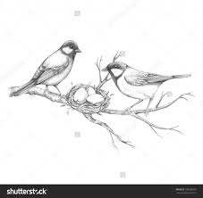 pencil sketch drawing birds 78 ideas about drawings of birds on