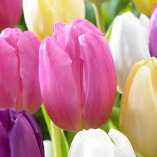 Flag Flower Tulip Pink Flag Mirror Garden