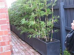 Large Planter Box by Maybe Plant The Bamboo In Long Planter Box Instead Of Just