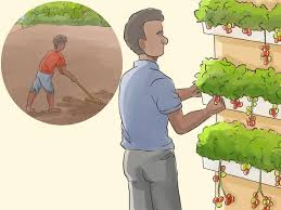 how to benefit from hydroponic indoor gardening 6 steps