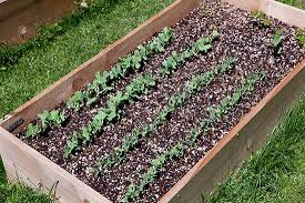 building raised beds for your vegetable garden organic gardening