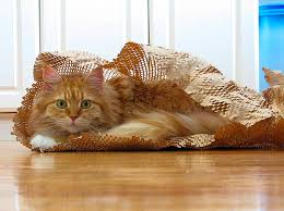 where can i buy packing paper creativity sometimes it s a disease 15 ways to reuse packing