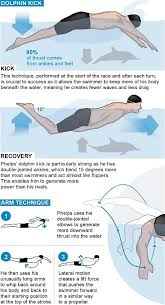 Male Dolphin Anatomy Michael Phelps The Man Who Was Built To Be A Swimmer Telegraph