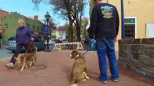 australian shepherd odor aggressive dog training australian shepherd dog training off