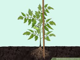 3 ways to stake up a bush or tree wikihow