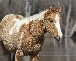 curly hair horse aww