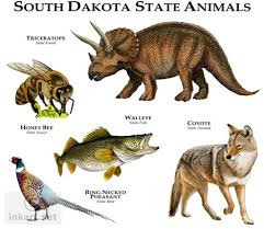 South Dakota wildlife images Wildlife art state animals jpg
