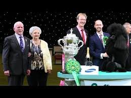 affenpinscher crufts 2014 24 best crufts 2013 images on pinterest php dog world and newspaper