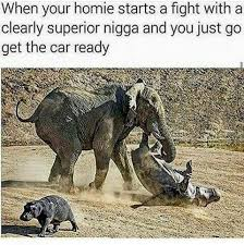 Elephant Meme - the best elephant memes memedroid