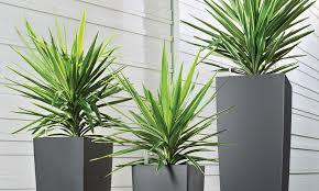 why atlanta office plants atlanta office plants