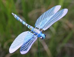 windy wings dragonfly garden stakes set of 6 only 23 99 at