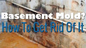 How To Wash Walls by How To Clean Mold In Basement Basements Ideas