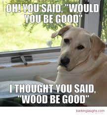 Oh You Dog Meme - 17 unforgettable funny dog memes unleashed barking laughs