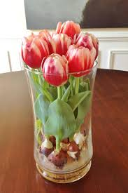 Tulip Vases Homelife How To Grow Tulip Bulbs In A Vase
