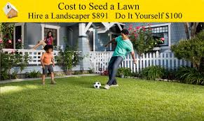 cost to seed a lawn youtube