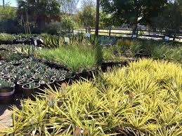 san francisco native plants garden bloggers fling