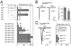 salk institute floor plan a role for extracellular na in the channel gating of native and