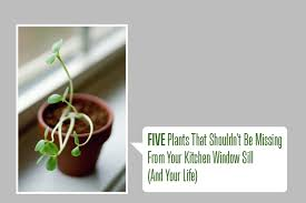Kitchen Windowsill 5 Plants That Shouldn U0027t Be Missing From Your Kitchen Window Sill
