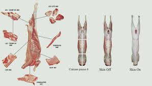 Loin Human Anatomy Alafis International Pty Ltd Goat