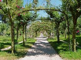 free photo path summer trellis walkway trees max pixel
