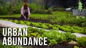 What Is An Urban Garden Organic Urban Farming On A 1 2 Acre Property Urban Abundance