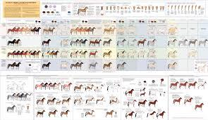 hwo horse color guide u2022 horse world online