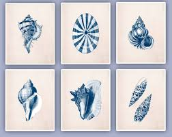 seashells prints set six 8x10 navy color prints seashore
